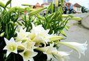 Ăn - Chơi - Mê mẩn vẻ đẹp của những loài hoa tháng Tư