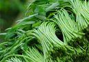 Sức khoẻ - Làm đẹp - Những loại rau bẩn nhất mùa hè