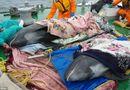 Tâm điểm dư luận - Cá heo chết trước sóng thần - sự trùng hợp ngẫu nhiên?