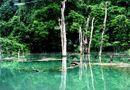 Hiện trường - Khám phá hình ảnh thu nhỏ của Vườn quốc gia Phong Nha – Kẻ Bàng