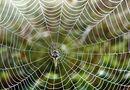 Sức khoẻ - Làm đẹp - Bất ngờ với tác dụng chữa bệnh tim của tơ nhện