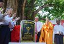 Tin trong nước - Công nhận cây bồ đề 132 tuổi là Cây di sản VN