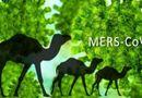 Tin trong nước - Cùng chuyên gia chuẩn đoán và điều trị Mers - CoV