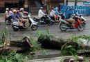 Tin trong nước - Hà Nội: Thót tim 50 người cứu nạn nhân bị cây cổ thụ đè