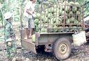 Thị trường - Thương lái lại ồ ạt mua sầu riêng non xuất sang Trung Quốc