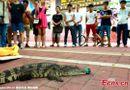 Thị trường - Tuyển dụng bằng thử thách hôn cá sấu tại Trung Quốc