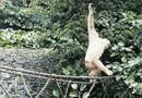 """Cộng đồng mạng - Bức ảnh khỉ leo dây khiến dân mạng tưởng """"quái vật"""""""