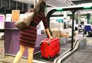 Tin trong nước - Singapore cấm nhập cảnh khách VN: Không phải giờ mới cấm