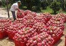Thị trường - Nghịch lý trái cây Việt: Nơi rẻ bèo, chỗ đắt đỏ