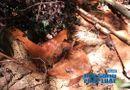 Tài nguyên - Vườn Quốc gia Vũ Quang: Phát hiện rừng gỗ De bị tàn phá