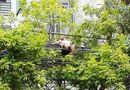 Tin trong nước - Nam thanh niên cởi trần nằm vắt vẻo trên đường dây điện