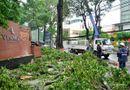 Tin trong nước - TP.HCM: Mưa giông khiến cây xanh gãy làm nhiều người bị thương
