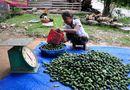 """Thị trường - Thương lái Trung Quốc """"giết"""" nông sản Việt bằng cách nào?"""