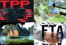Kinh doanh - TPP và FTA với EU giúp Việt Nam bù đắp thâm hụt thương mại?