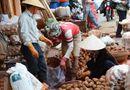 Thị trường - Khoai tây Trung Quốc lại được vào chợ nông sản Đà Lạt