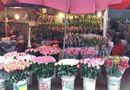 Thị trường - Thị trường hoa ngày 8/3 tăng giá mạnh, sức mua kém