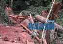 Tin trong nước - Bắt quả tang nhóm lâm tặc phá rừng đặc dụng Cha Lo