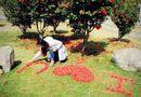 Nữ sinh xinh đẹp xếp hoa tỏ tình với bạn trai phương xa