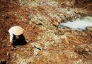 Tin trong nước - Hạn mặn còn kéo dài, Ban chỉ đạo TƯ về phòng chống thiên tai ra công điện khẩn