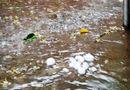 Tin trong nước - Liên tiếp xuất hiện mưa đá ở miền Tây Nghệ An