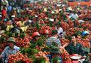 Thị trường - Vải thiều Việt: Gian nan con đường xuất ngoại
