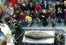 Tài nguyên - Cá ngừ vây xanh nặng 135kg dạt vào bờ biển Anh