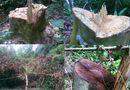 Tài nguyên - Cháu phó chủ tịch huyện thâu tóm cả cánh rừng