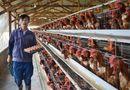 Tây Nguyên - Lâm Đồng kiểm soát tốt dịch cúm gia cầm