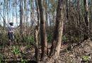 Tài nguyên - Đồng Nai: Gần 30 ngàn cây gỗ lớn bị thiêu chết vì nắng nóng