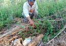Tây Nguyên - Cần có biện pháp xử lý quả đạn pháo tại Đắk Nông