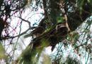 Tài nguyên - Khi chim quý rủ nhau về làm tổ
