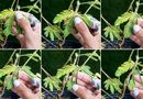 Hiện trường - Khám phá 4 loài cây có khả năng đặc biệt giống con người