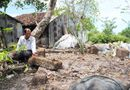 Miền Nam - Cà Mau: Phát hiện 2 ngôi mộ cổ trong vườn nhà