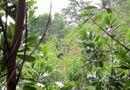 Miền Trung - Quảng Nam: Bò tót xuống núi húc 4 người thương vong