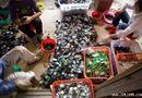 Y tế sức khỏe - Tái chế rác thải điện tử: đường còn dài