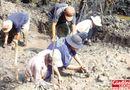 Tin trong nước - Hơn 1.000 ngày xới ruộng tìm kho báu của vương quốc Phù Nam