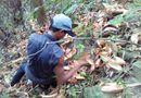 Tin trong nước - Nam Trà My: 8 người chết và bị thương do hái ươi