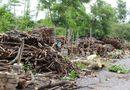 Miền Nam - Lạ lùng nghề mót củi giữa Sài Gòn