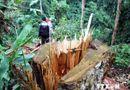 Tin pháp luật - Khởi tố Phó Giám đốc thuê người phá rừng