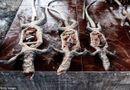 """Tin thế giới - Hình ảnh gây sốc ở """"chợ thực phẩm kinh dị nhất thế giới"""""""