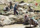 Tài nguyên - Dân băng rừng, lội suối vì rộ tin đào được 1,4kg vàng