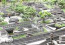 Đời sống - Clip: Khám phá Cố đô Huế giữa lòng Sài Gòn