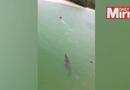 Tin thế giới - Thót tim với cảnh cá sấu khổng lồ truy sát người bơi dưới sông
