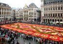 Hiện trường - Thảm hoa lộng lẫy dệt từ 750.000 bông thu hải đường