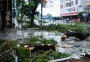 Tin trong nước - Quảng Ninh thiệt hại khoảng 20 tỷ đồng do bão số 3