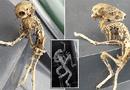 Tin thế giới - Phát hiện bộ xương kỳ lạ giống sinh vật ngoài hành tinh ở Anh