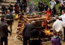 Tài nguyên - Công khai tiêu hủy 50kg sừng tê giác tại Châu Âu