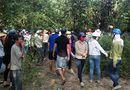 An ninh - Hình sự - Nữ nhân viên tiệm vàng chết trong rừng ở Bình Thuận