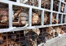 Tin thế giới - Nạn trộm chó ghê rợn ở Việt Nam lên truyền thông Anh