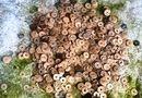 Tin trong nước - Hà Tĩnh: Phát hiện 22kg tiền cổ trong vườn nhà